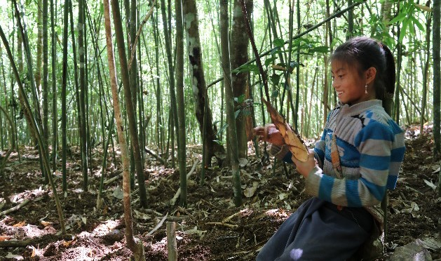 Capitalizing bitter bamboo group experience and improving marketing of bitter bamboo shoots (Lao Farmer Network)