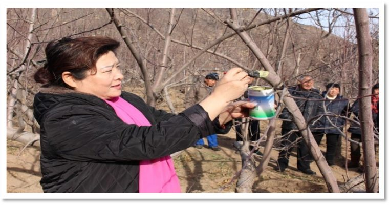 For more women, for better life: Yinongyuan Ecological Agricultural Cooperative