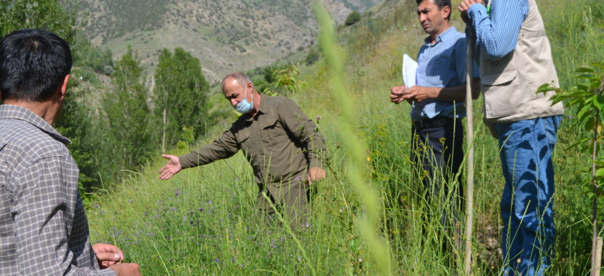Growing native plants for the rehabilitation of pastures and forestry